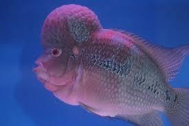 fish 8