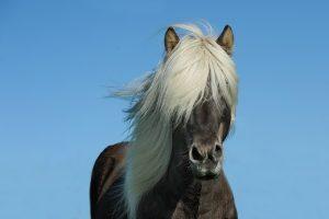 horse-1330690__340