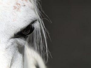 horse-3356298__340