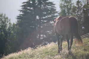 horses-1150017__340