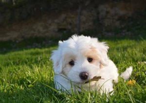dog-2215158__340