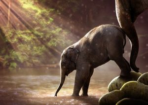 elephant-2380009__340