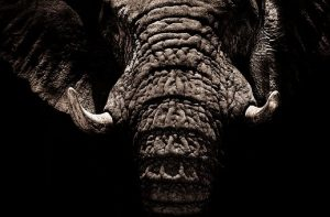 elephant-2894633__340