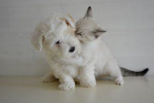 kiss-2728106__340