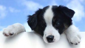 puppy-1237213__340