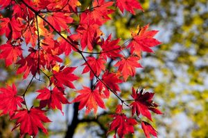 autumn-2789234__340