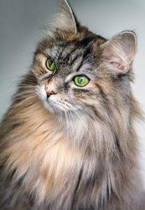 cat-1246659__340