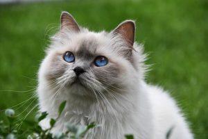cat-3526645__340