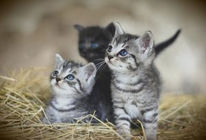 cat-3535399__340