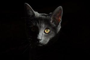 cat-778315__340