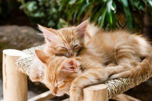 kittens-1916542__340