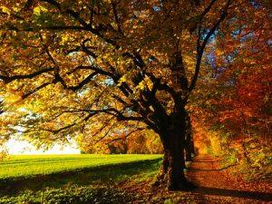 tree-779827__340