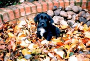Poppy as a puppy