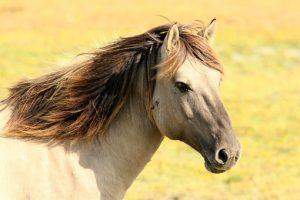 horse-197199__340