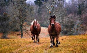 horses-1984977__340