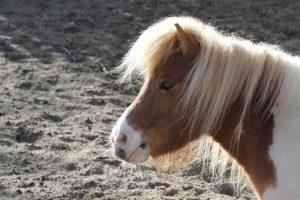 pony-3312680__340