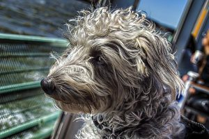 dog-2538916__340