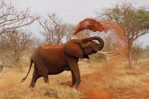 elephant-111695__340