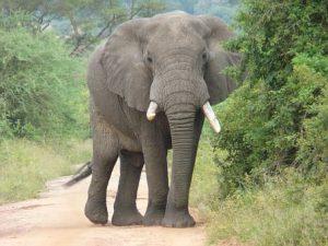 elephant-2064249__340