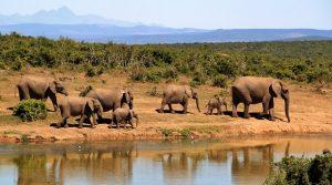 elephant-279505__340