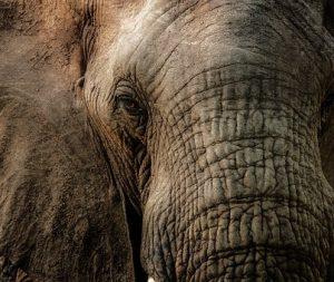 elephant-2810955__340
