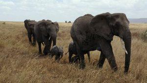 elephant-687338__340