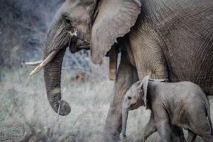 elephants-1081749__340