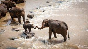 elephants-1900332__340