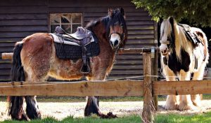 horses-2180584__340