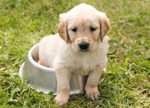 puppy-1207816__340