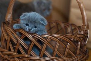 adorable-1845789__340