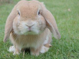 bunny-1149060__340