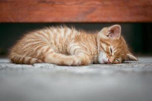 cat-1941089__340