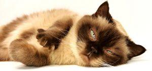 cat-3113513__340