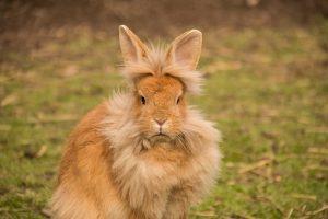 hare-2218452__340