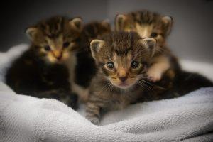 kittens-1824367__340