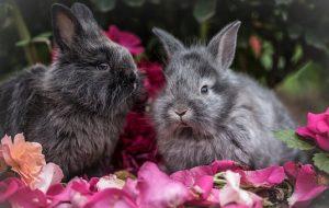 rabbit-2562684__340