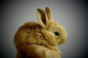 rabbit-373691__340