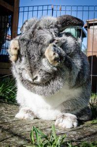 rabbit-963167__340