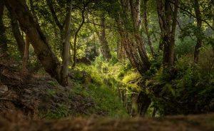 brook-landscape-3570116__340