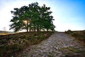 luneburg-heath-3626310__340